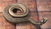 毒蛇蛇 3d model