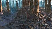 Rain Forest 3d model