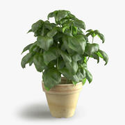 Photorealistic Basil Pot 3d model