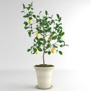 Ceramika z drzewa cytrynowego 01 3d model