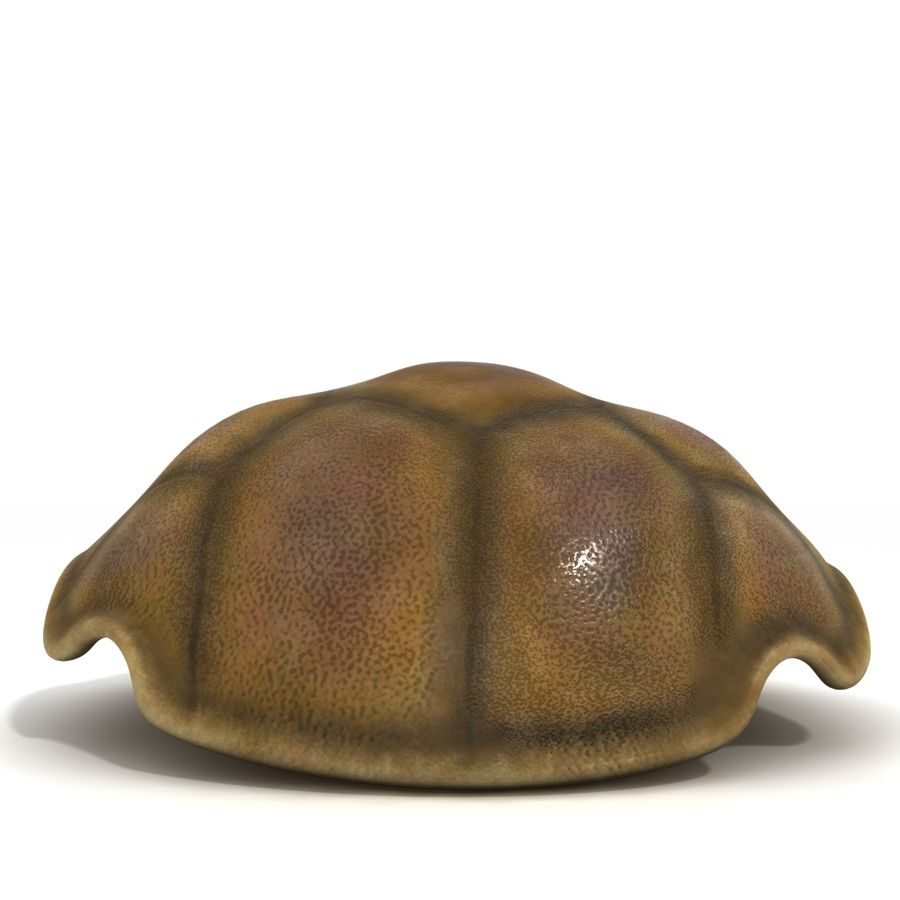 kaplumbağa kabuğu royalty-free 3d model - Preview no. 4