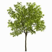 Träd # 3 3d model