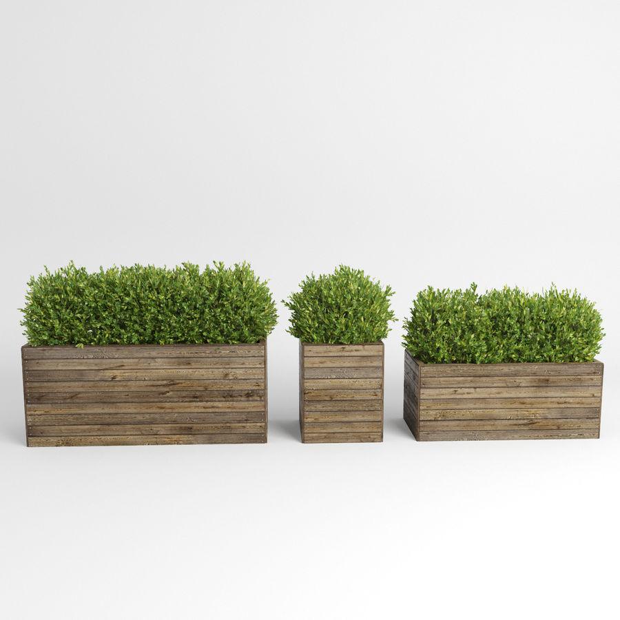 Sebes em plantadores de madeira royalty-free 3d model - Preview no. 7