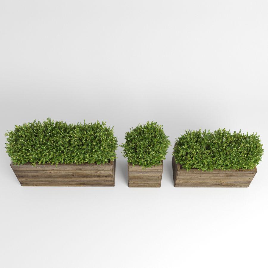 Sebes em plantadores de madeira royalty-free 3d model - Preview no. 11