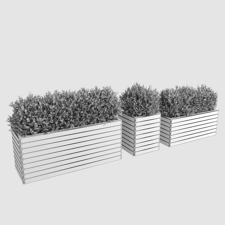Sebes em plantadores de madeira royalty-free 3d model - Preview no. 8