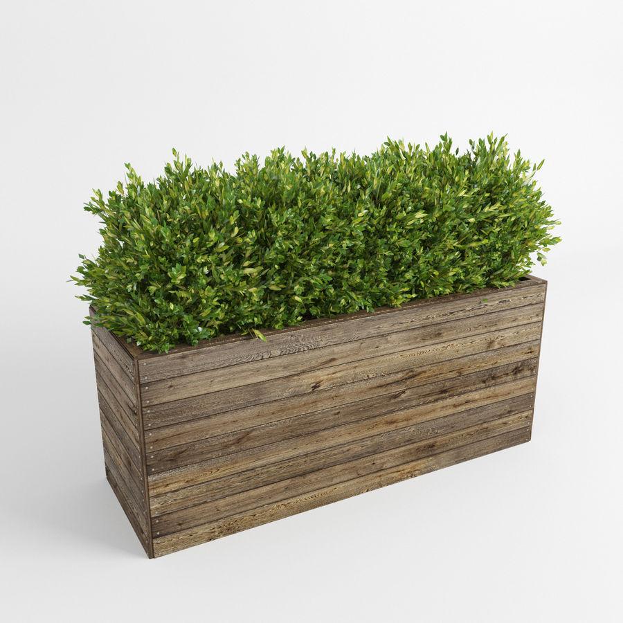 Sebes em plantadores de madeira royalty-free 3d model - Preview no. 3