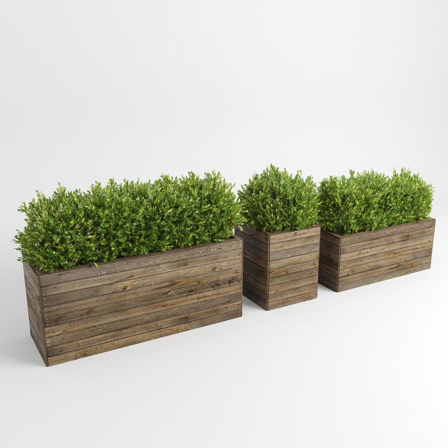 Sebes em plantadores de madeira royalty-free 3d model - Preview no. 2