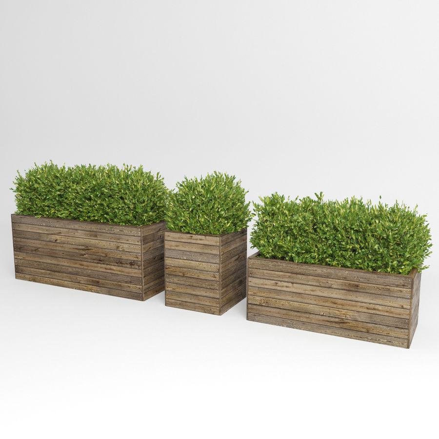 Sebes em plantadores de madeira royalty-free 3d model - Preview no. 9