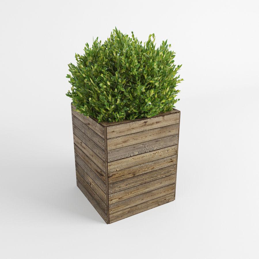 Sebes em plantadores de madeira royalty-free 3d model - Preview no. 4