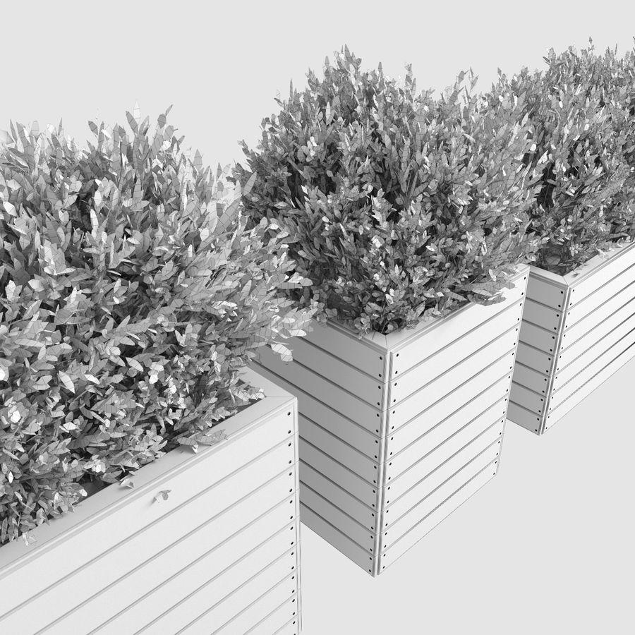 Sebes em plantadores de madeira royalty-free 3d model - Preview no. 10