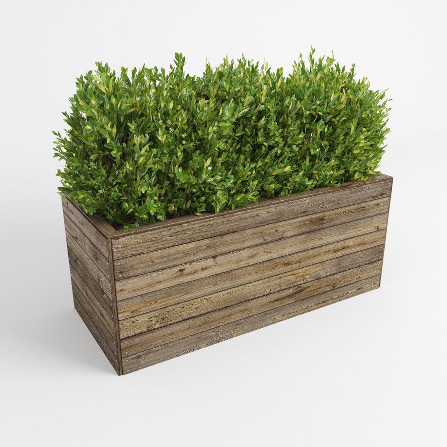 Sebes em plantadores de madeira royalty-free 3d model - Preview no. 6