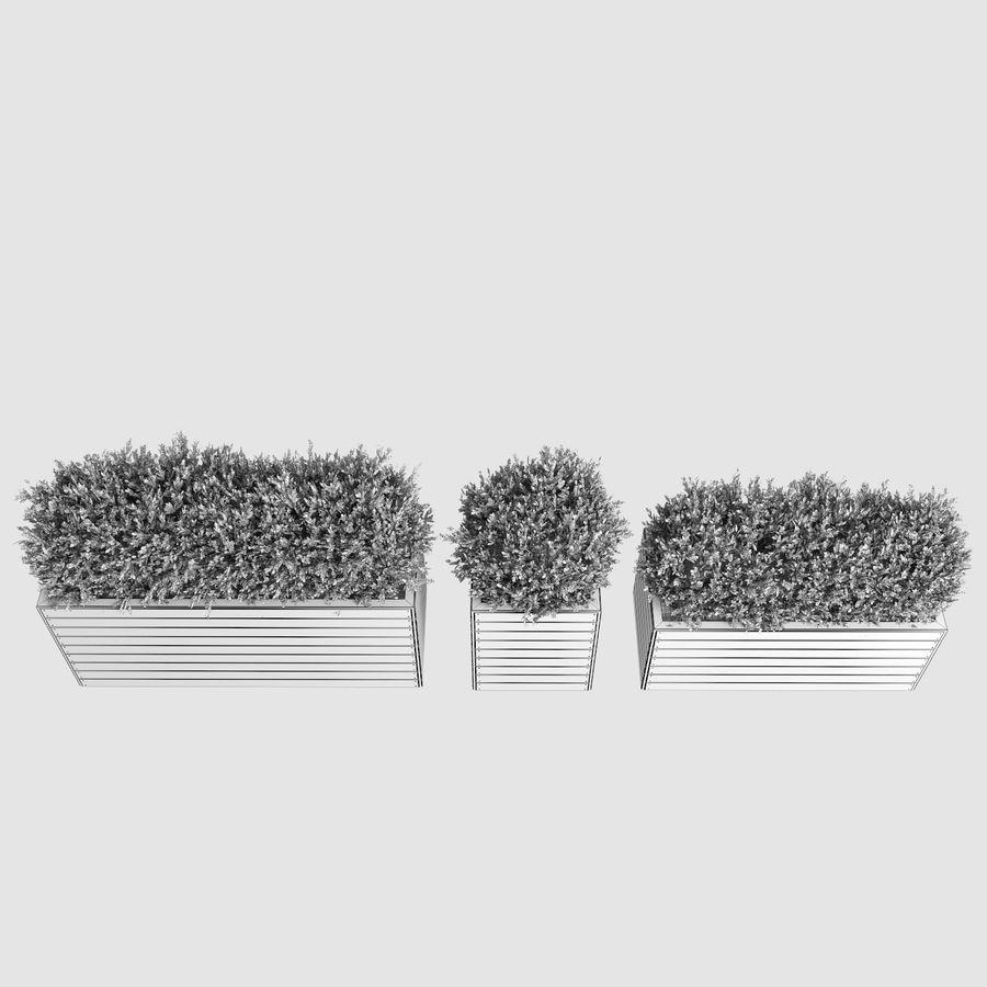 Sebes em plantadores de madeira royalty-free 3d model - Preview no. 14