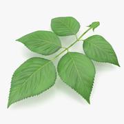 Rose Leaves 3d model