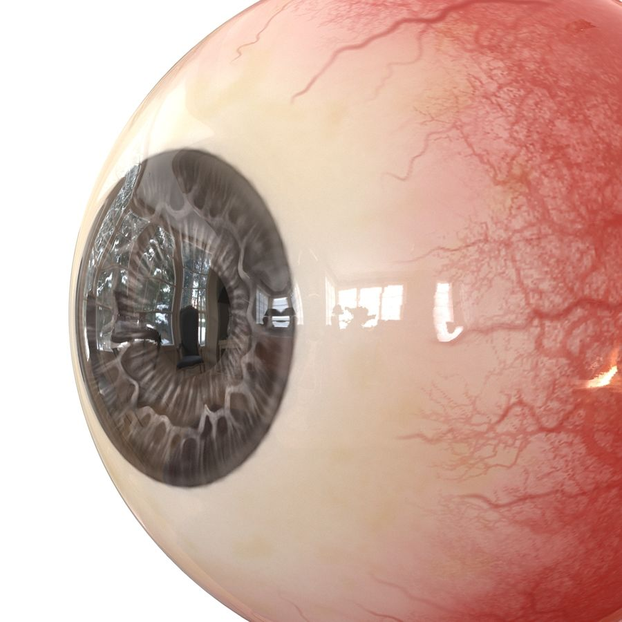 Human Eye royalty-free 3d model - Preview no. 12