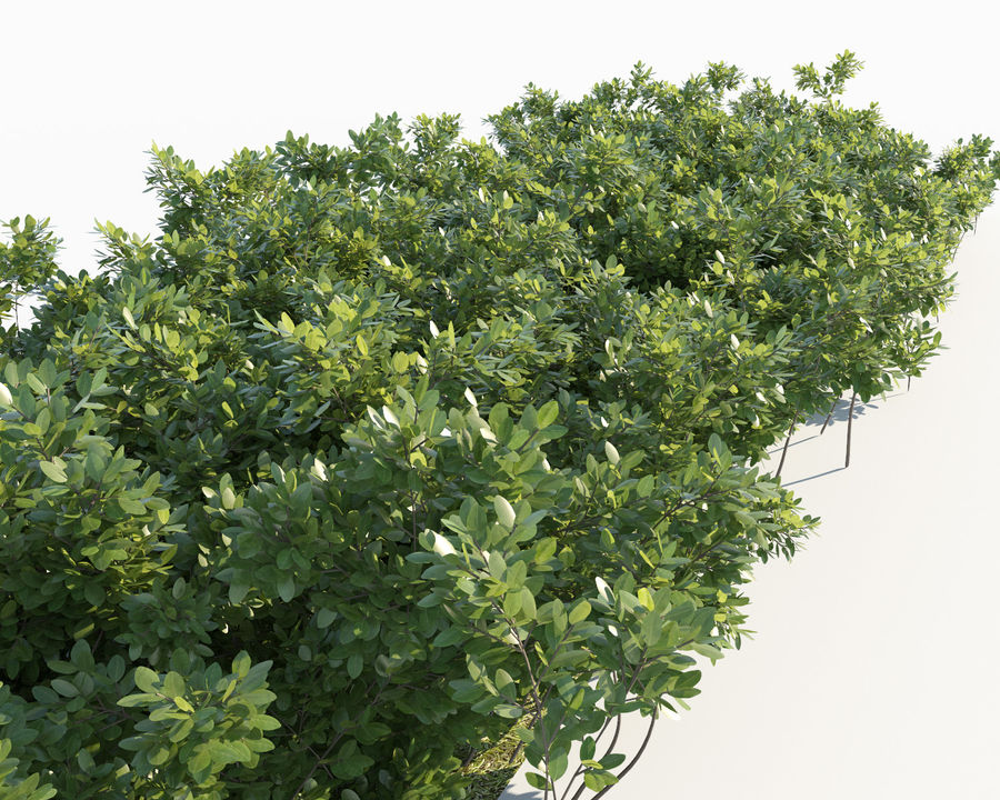 Scatterable Shrubs royalty-free 3d model - Preview no. 3