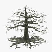 Old Oak(Dead) 3d model