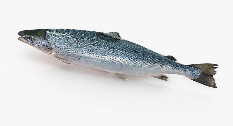 Atlantischer Lachs royalty-free 3d model - Preview no. 6