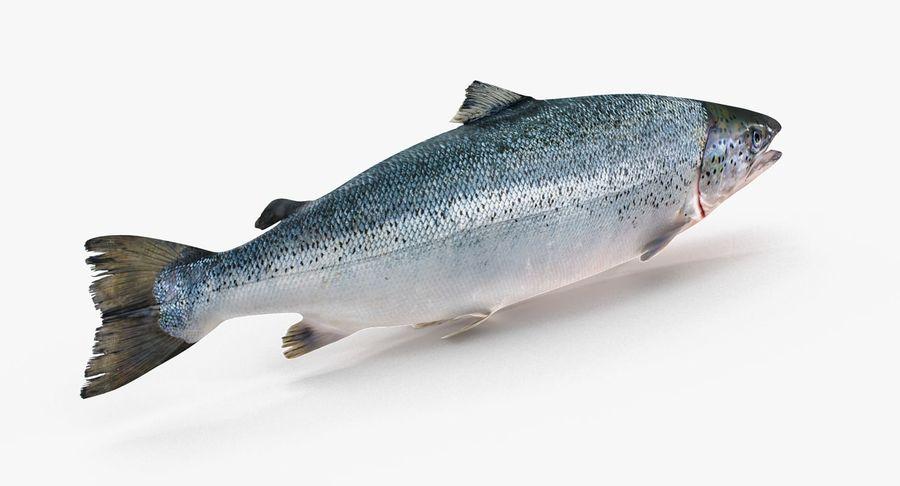 Atlantischer Lachs royalty-free 3d model - Preview no. 5