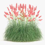 Pampas Grass Set 3d model