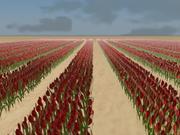 Campo de tulipanes en Holanda modelo 3d