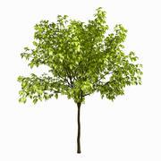 Tree #1 3d model