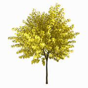 Tree #2 3d model
