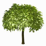 Ağaç # 9 3d model