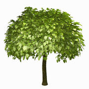 Дерево № 9 3d model