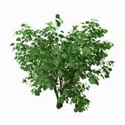 나무 # 10 3d model