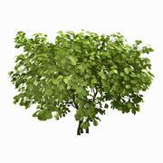 나무 # 11 3d model