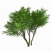 Tree #13 3d model