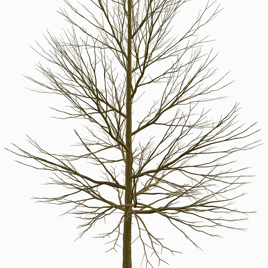Tree #18 royalty-free 3d model - Preview no. 3