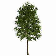 Tree #18 3d model