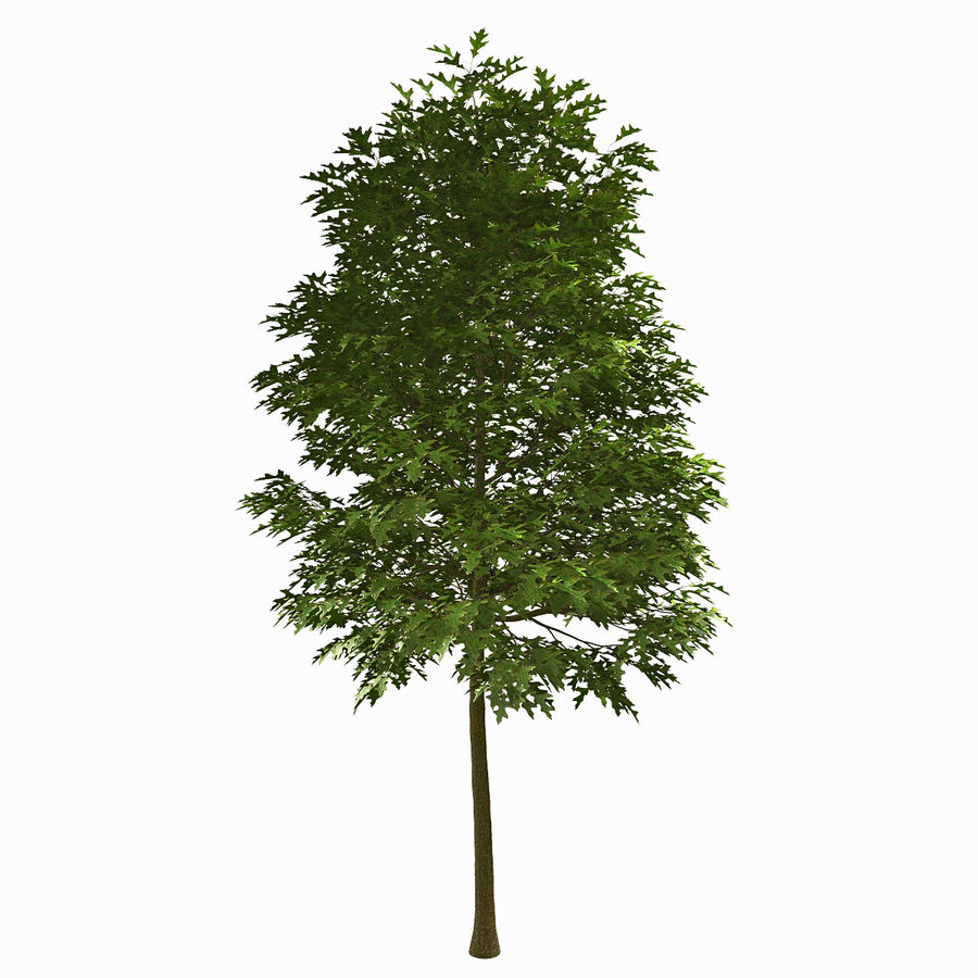 Tree #18 royalty-free 3d model - Preview no. 1