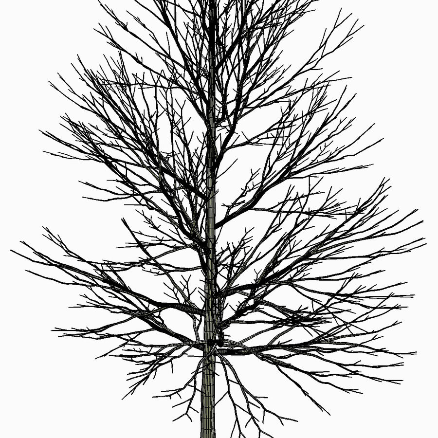 Tree #18 royalty-free 3d model - Preview no. 6
