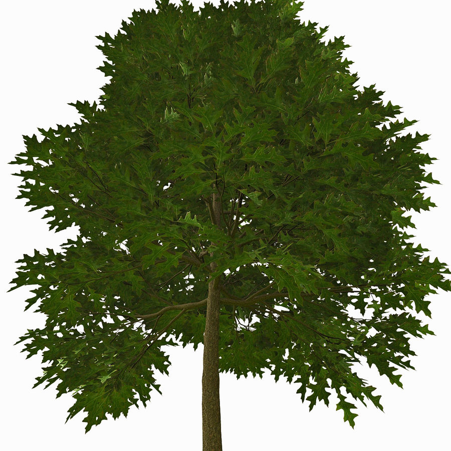 Tree #18 royalty-free 3d model - Preview no. 2