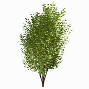 Tree #24 3d model