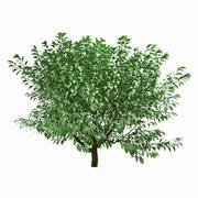 Tree #25 3d model