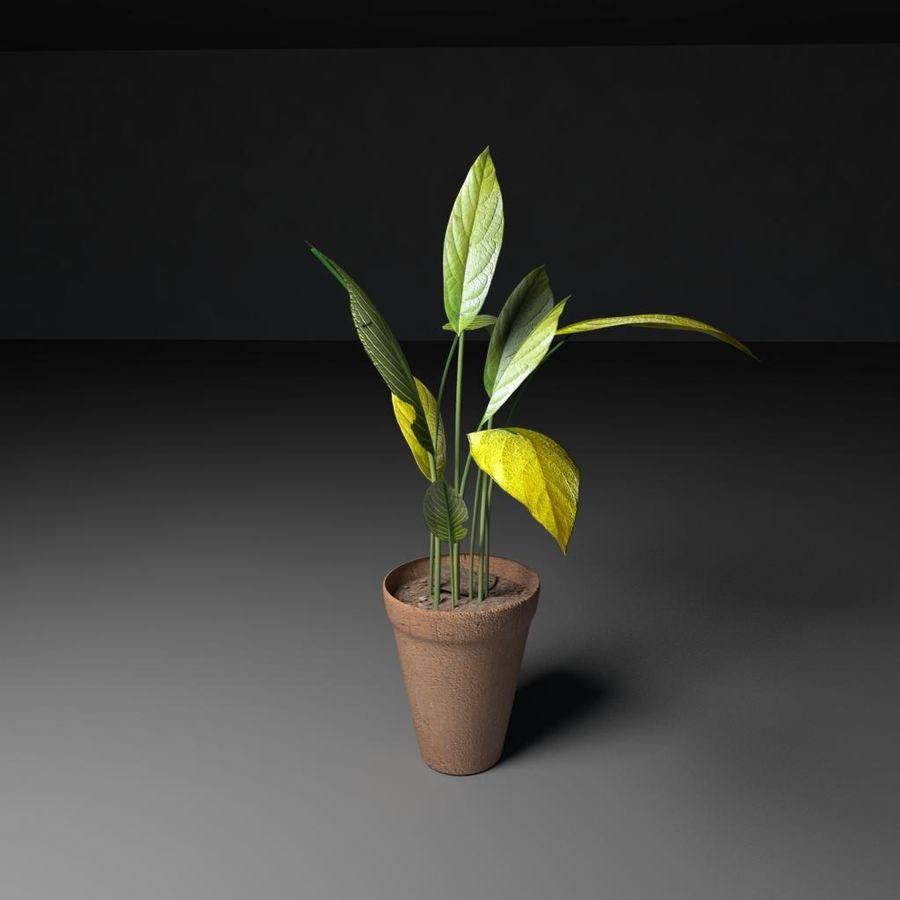 Plantar royalty-free 3d model - Preview no. 2