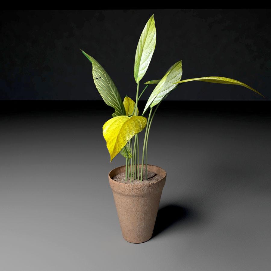 Plantar royalty-free 3d model - Preview no. 1