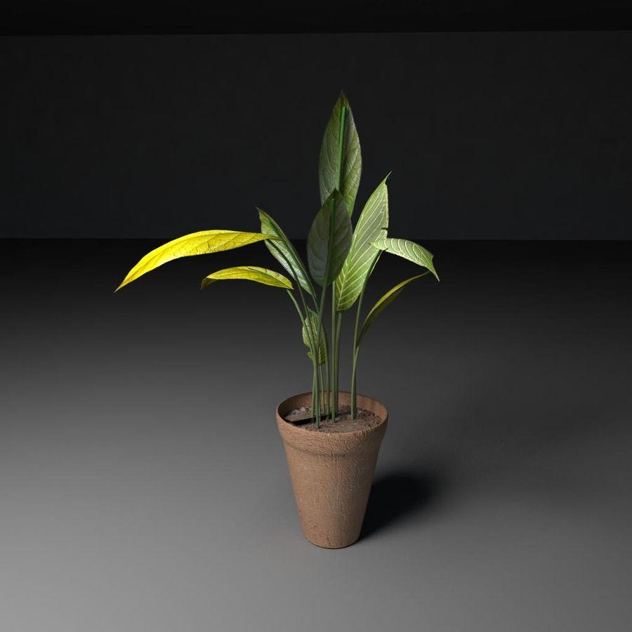 Plantar royalty-free 3d model - Preview no. 3