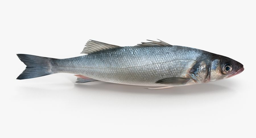 Seabass royalty-free 3d model - Preview no. 6