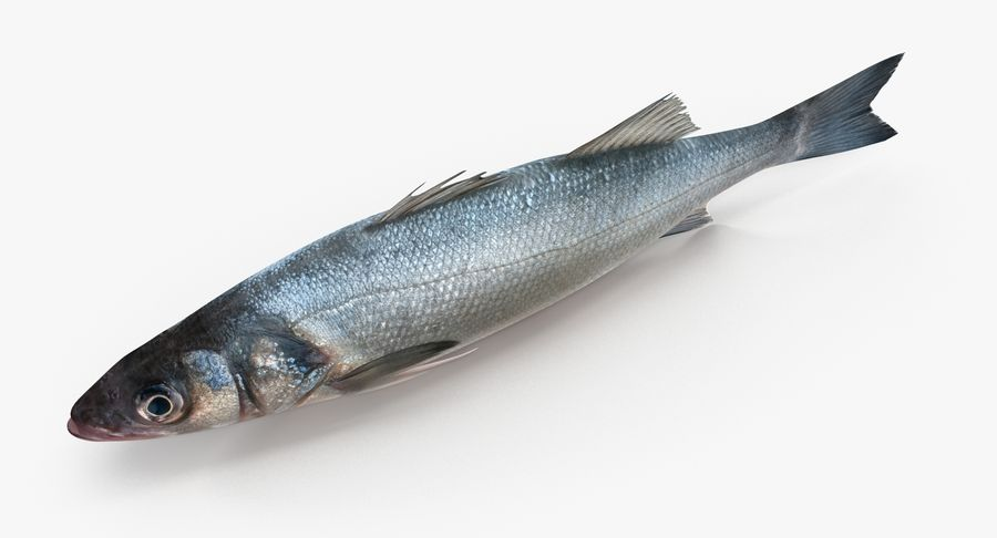 Seabass royalty-free 3d model - Preview no. 5
