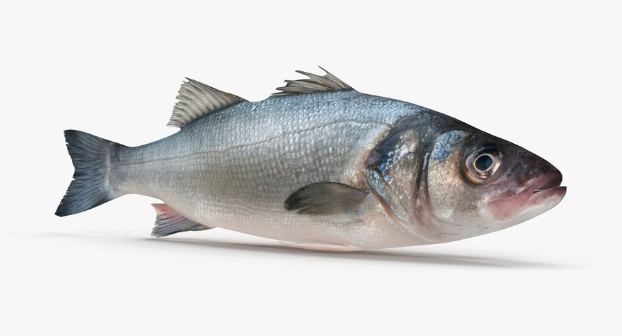 Seabass royalty-free 3d model - Preview no. 2