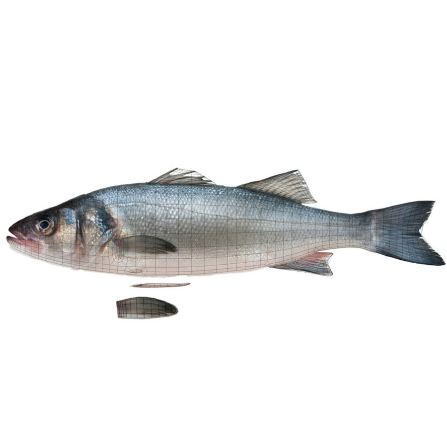 Seabass royalty-free 3d model - Preview no. 9