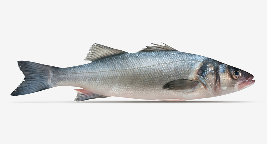 Seabass royalty-free 3d model - Preview no. 1