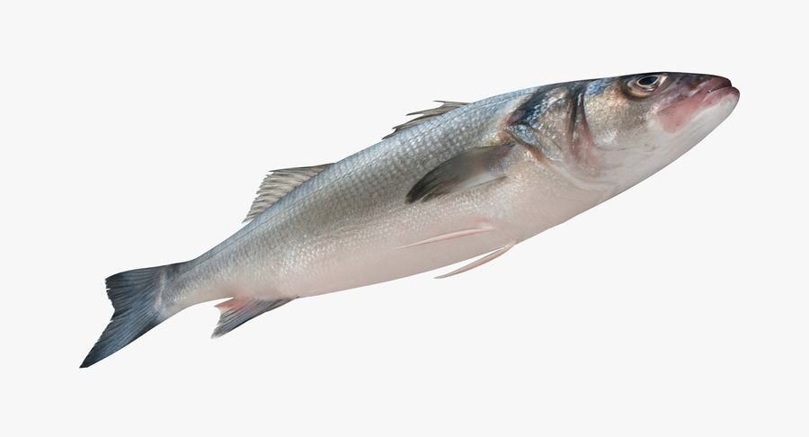 Seabass royalty-free 3d model - Preview no. 4