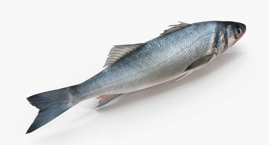 Seabass royalty-free 3d model - Preview no. 3