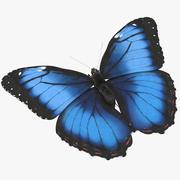 Blue Morpho Butterfly Flying Pose 02 3d model