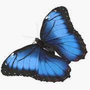 Blue Morpho Butterfly Wings Open Pose 01 3d model